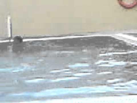 Swumming Pool bath seen