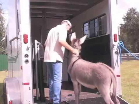 Xxx Mp4 Donkey Baby Learns Human World Training Procedures 3gp Sex