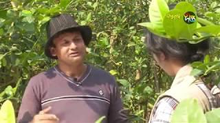 Deepto krishi/দীপ্ত কৃষি - কলম্ব লেবু চাষ/নরসিংদী, পর্ব ২৪