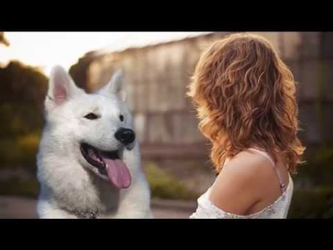 Mujer mantenia relaciones con su perro