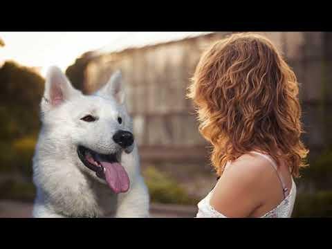 Xxx Mp4 Mujer Mantenia Relaciones Con Su Perro 3gp Sex