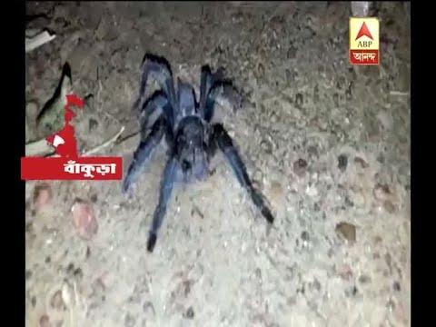 Xxx Mp4 Giant Spider In Katra Bankura 3gp Sex