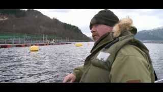 Trailer: FILET! OH FISH