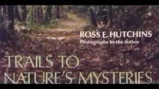 Muttant Dog Attacks   Horrific   Full Length Documentary HD