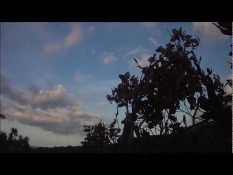 N°4 Chasse aux pigeons de migration en Corse du Sud 2012 2013