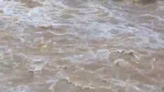 부산시 창원시 폭우, 마산 진동 태풍급의 폭우에 불어난 강물 [Busan Changwon rain, the rain swollen river Masan]