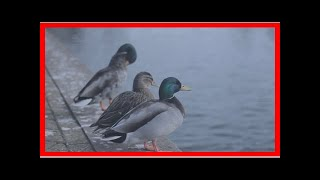 US Newspapers - Traveling couple fined £50 for ducks eat-aol uk