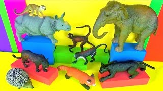 Wild Animals Kids Toy Collection Jungle Book Monkeys Panther 3D Toys Mico Macaco Funny End