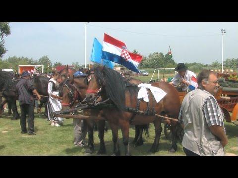 13. Državna i 18. � upanijska izložba konja Kloštar Ivanić