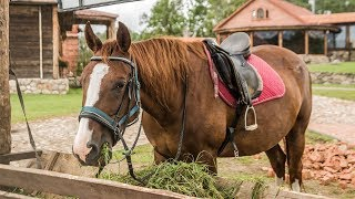 FEEDING my pet HORSE!!