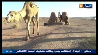 ....نورالدين رحماني  رفع الماء بالجمل في صحراء ولاية البيض بالجزائر