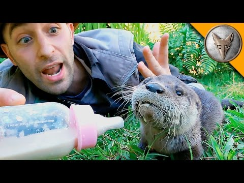 Baby Otter Feeding Time