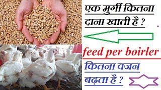 एक मुर्गी कितना दाना खाती है ? कितना वजन बढ़ता है ? feed per chicks weight gained per boirler