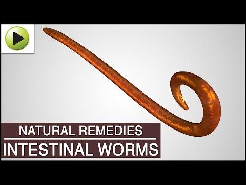 Intestinal Worms - Natural Ayurvedic Home Remedies