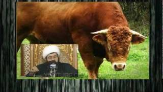 حقيقة الثور والبومة في أساطير بني مجسون
