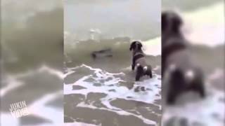 Seal Becomes Dog's Best Friend