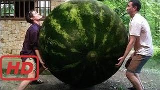 Primitive Technology vs World Amazing Modern Agriculture Progress Mega Machines Farming Equ -Gfktrc