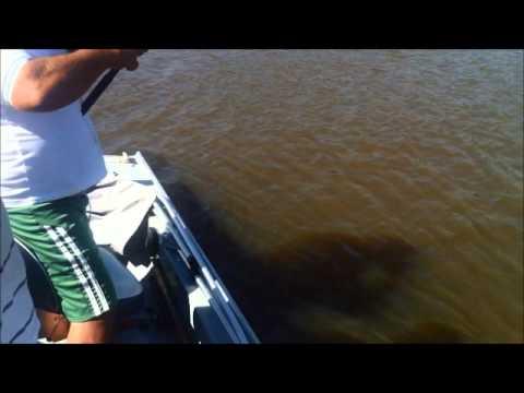 O Gigante do Rio Ivinhema