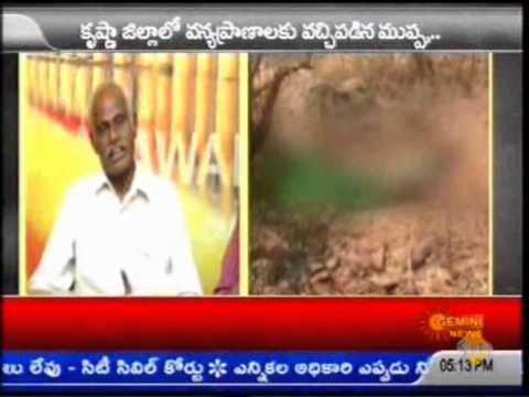 Wild Animals hunting in Konadapalli Forest D V Subba Rao Gemini News Vijayawada