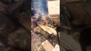 Inilah cara Membakar ikan mas