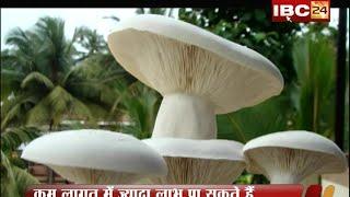 MASHROOM KI KHETI KAISE KAREN !!  PRODUCTION OF MASHROOM !! SONKAS BHUIYAN