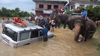 Elephants Help Rescue Tourists Stranded by Rising Flood Waters