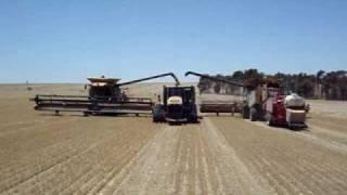 Harvest Glenvar 2007 - Wheat Australia big lexion