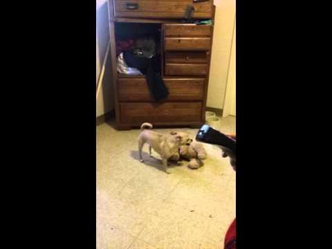 Xxx Mp4 Funny Vine Dog Having Sex With Teddy Bear 3gp Sex