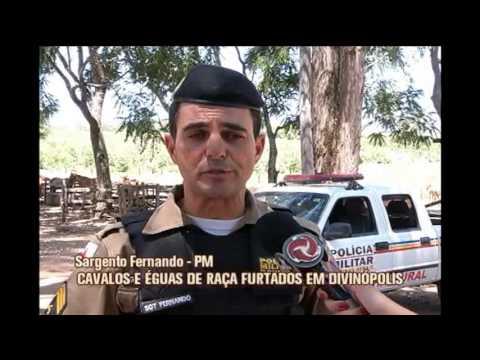 Cavalos e éguas de raça são furtados em fazendas de Divinópolis