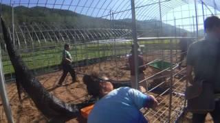 farmLife: quail farm + expansion
