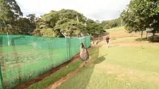 Emu has sex with my camera bag