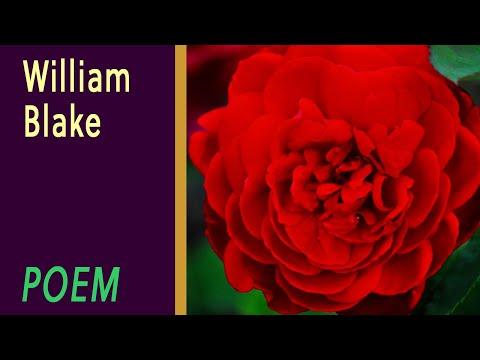 Xxx Mp4 The Sick Rose By William Blake VOICE 3gp Sex