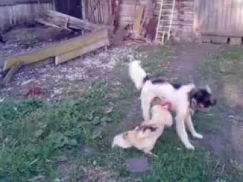 Xxx Mp4 Dog Fight The Cock 3gp 3gp Sex