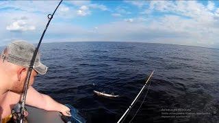 рыбалка на ладоге троллинг