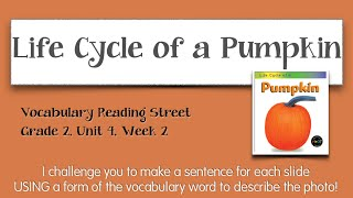 Life Cycle of a Pumpkin Vocabulary