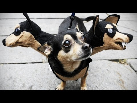 Funny DOGS in COSTUMES [Funny Pets]