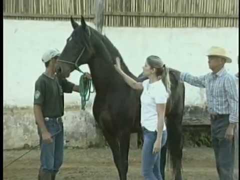 Criador de cavalos da raça Mangalarga Marchador