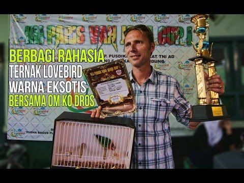 KISAH SUKSES : Mr. Ko Dros Peternak Lovebird Eksotik ( Exotic Lovebird Farm)