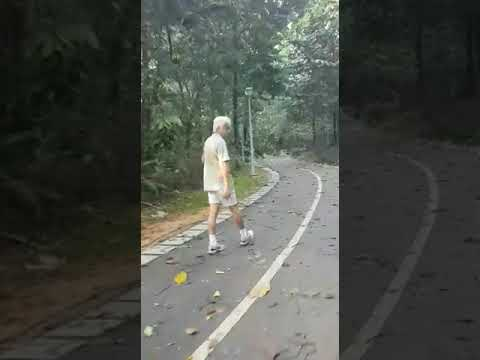 Xxx Mp4 Fallen Trees At Yishun Park After Heavy Rain 3gp Sex
