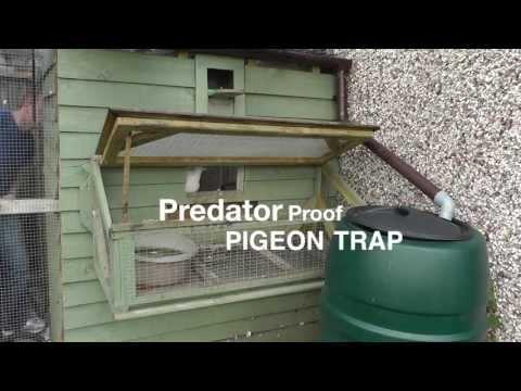 Clever Pigeon Loft Trap Door Design