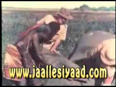 Somalia s Wild Life 1953