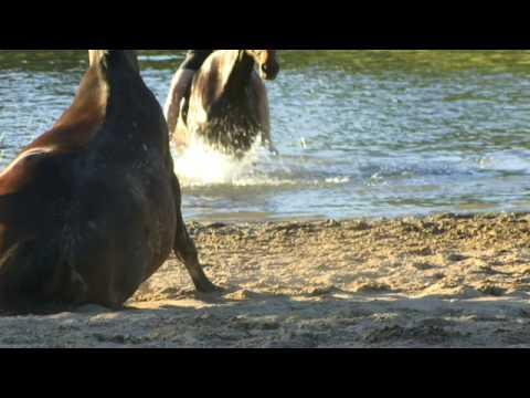 Swimming with Horses ULRICH SCHNAUSS Schwimmen mit Pferden