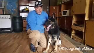 Single Purpose Dog - Training