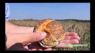 Poppy Seed - Seeding to Harvest  John Deere 7280R - S680i - Lemken  Blauwmaanzaad oogst Thes Agro