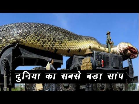 दुनिया का सबसे बड़ा सांप   World's Largest Snake   Hindi  