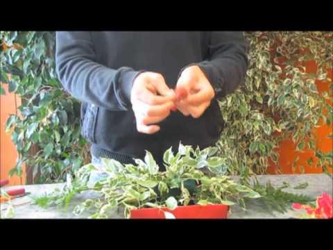 Art floral Comment faire un centre de table pour Noel