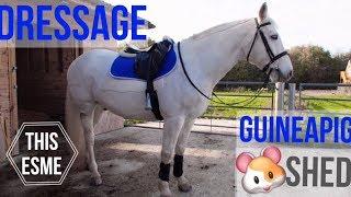 Vlog | Dressage and Guineapig shed building | This Esme