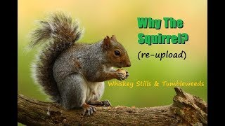 Why The Squirrel? (re-upload) -MGTOW