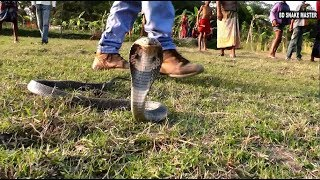 পটুয়াখালী রাজ্জাক বিশ্বাস এর ক্যামেরাম্যানকে সাপ এর আক্রমন করার ভিডিও |  BD Snake Master | HD