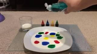 Magic milk experiment colours diy fun activity science